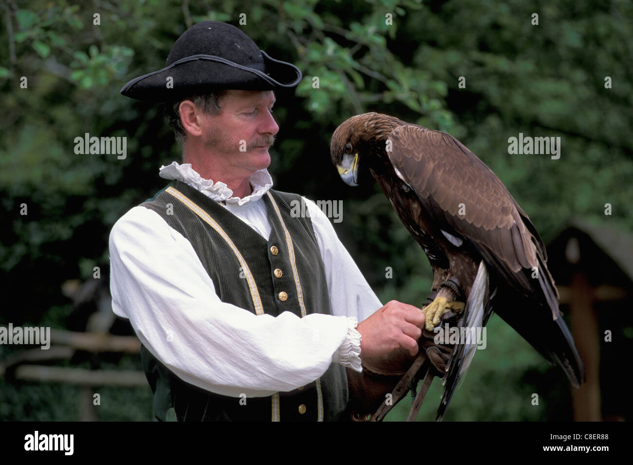 Birds of Prey, Show, Chateau la Bourbansais, Brittany, Bretagne, France, Europe, man - Stock Image