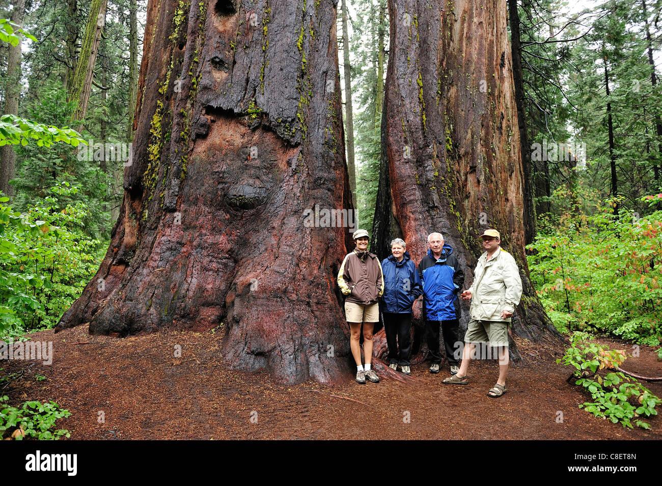 Family, North Grove Trail, Calaveras Big Tree, State Park, California, USA, United States, America, trees, wood, - Stock Image