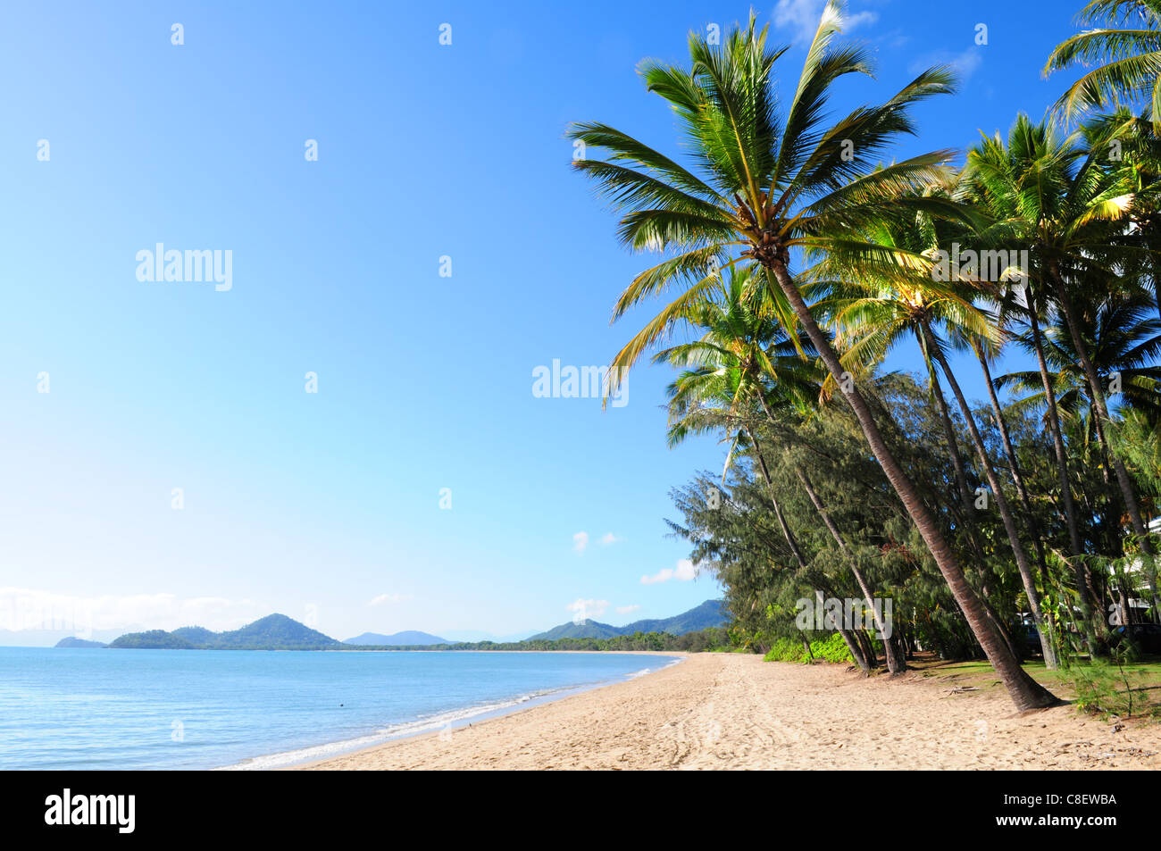 Beautiful green palm trees at tropical beach Palm Cove in Queensland, Australia Stock Photo