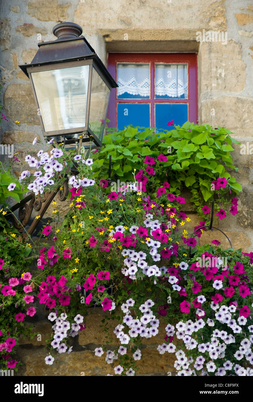 Purple petunias cascading from a window box in front of an old window in Sarlat, Dordogne, France - Stock Image