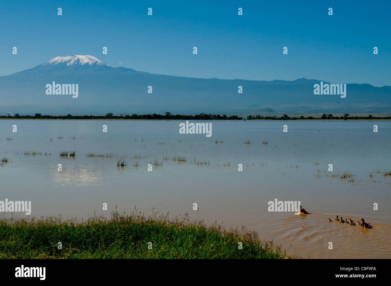 Amboseli National Park and Mount Kilimanjaro, Kenya, East Africa - Stock Image