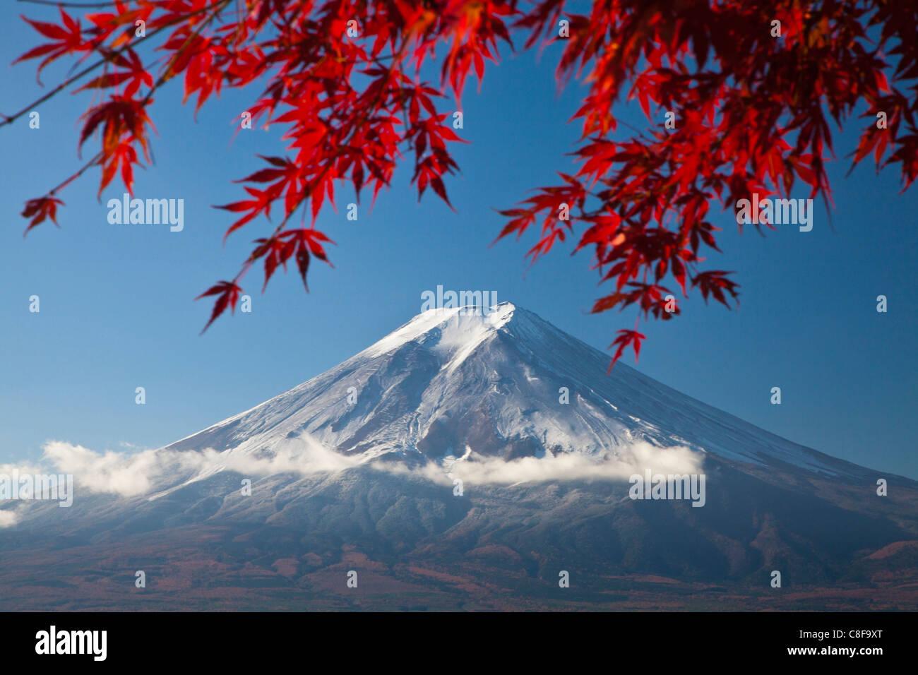 Japan, November, Asia, mountain Fuji, Fuji, maple, red, Japanese, maple, Momiji, snow, scenery Stock Photo