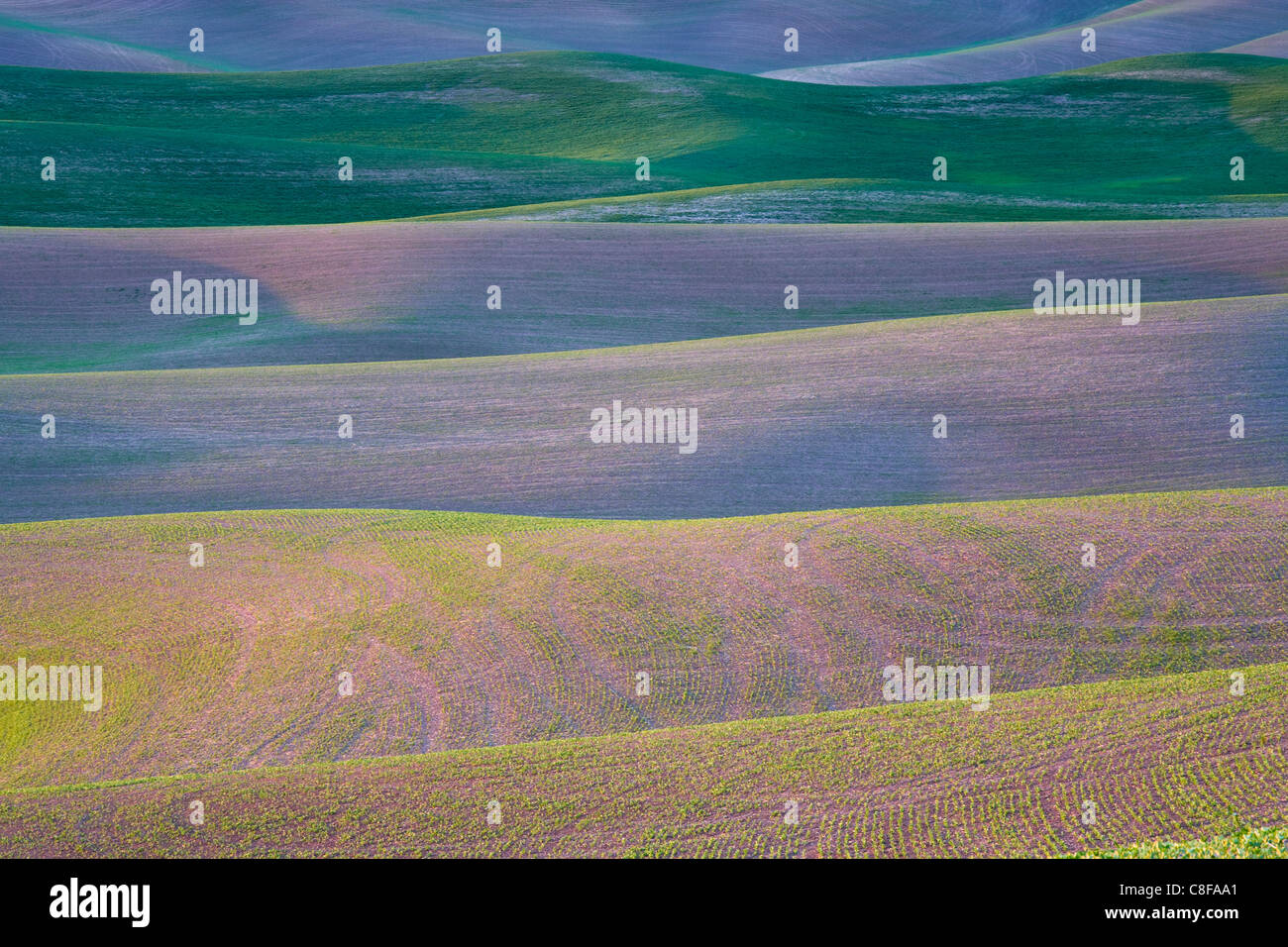 Field patterns at dawn, Palouse, Washington State, United States of America Stock Photo