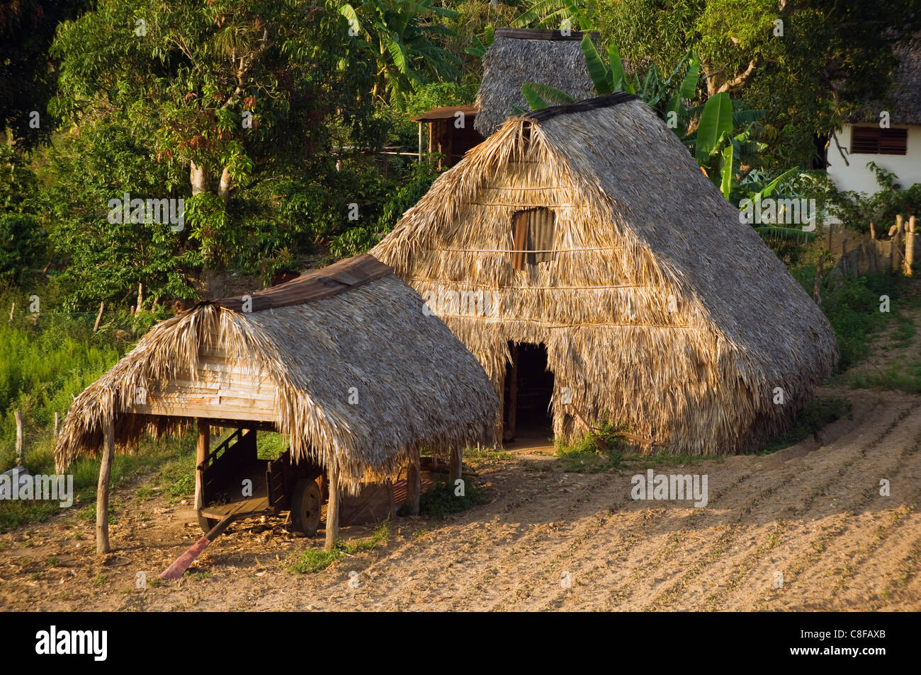 Thatched roof tobacco drying house, UNESCO World Heritage Site, Vinales Valley, Cuba, West Indies, Caribbean, Central - Stock Image