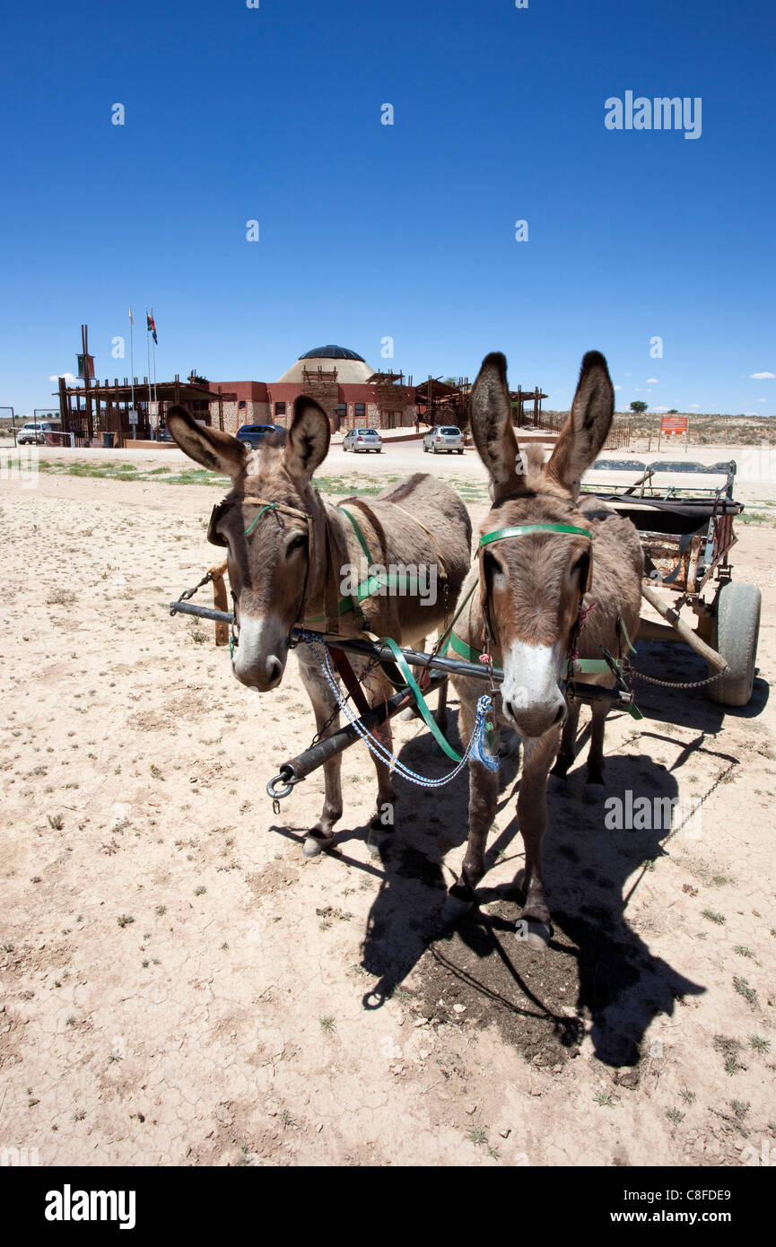 Donkey cart in Kalahari, entrance to Kgalagadi Transfrontier Park, border post between Northern Cape, South Africa - Stock Image