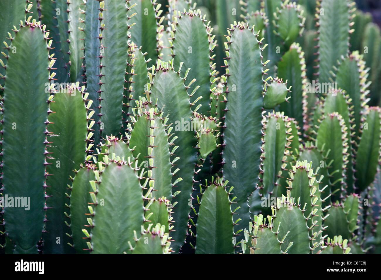 Guatiza Cesar Manrique Spain Europe Jardin de Cactus cacti