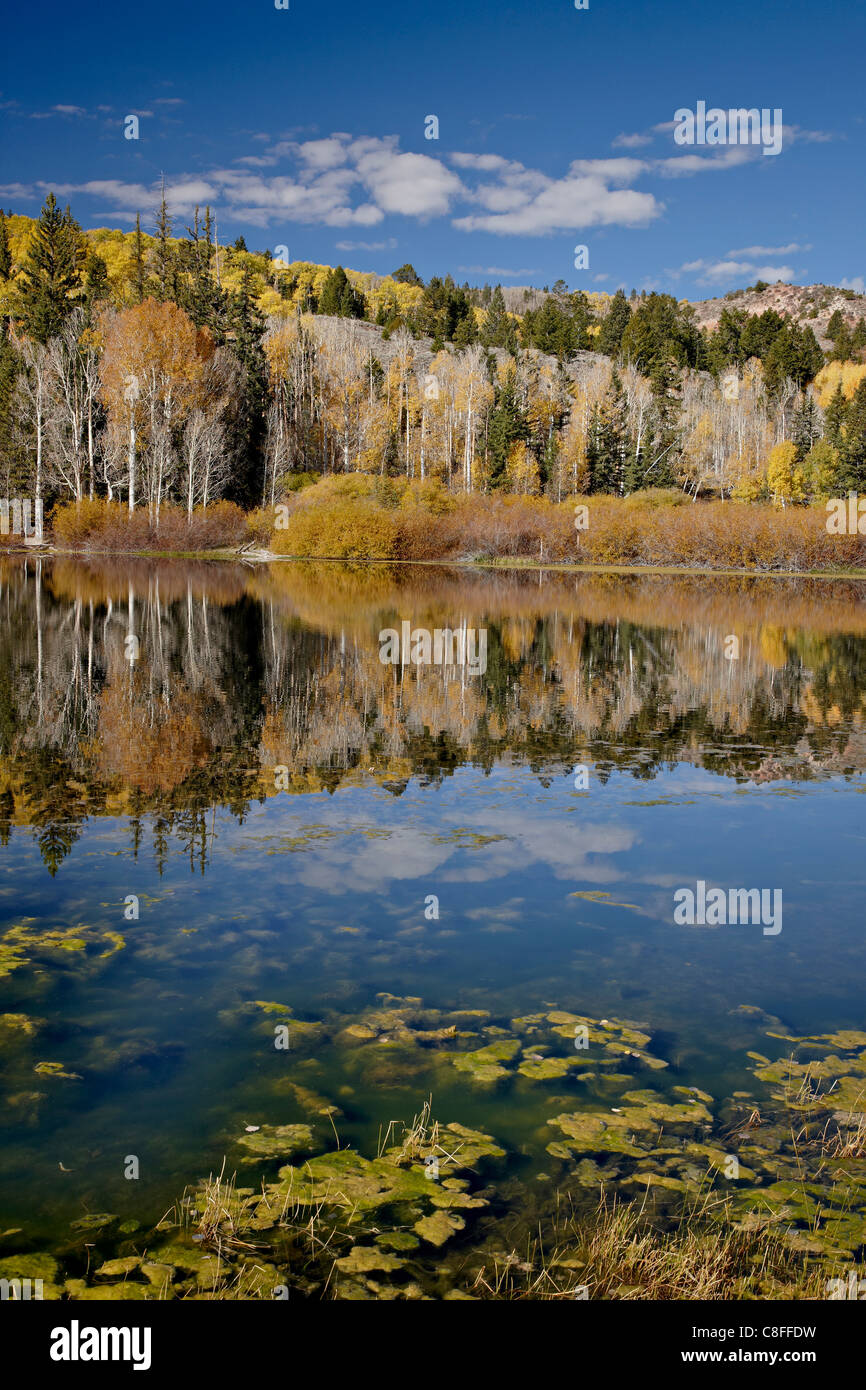 Yellow aspens reflected in Round Lake in the fall, Fishlake National Forest, Utah, United States of America - Stock Image