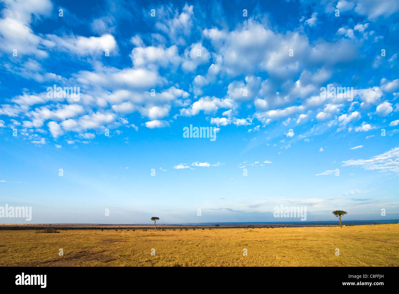 The Bush, Masai Mara National Reserve, Kenya, East Africa - Stock Image