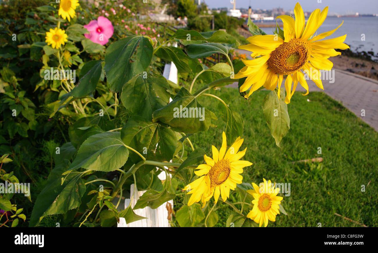 flowers overflowing fence along shoreline in borough of staten island new york usa - Staten Island Botanical Garden