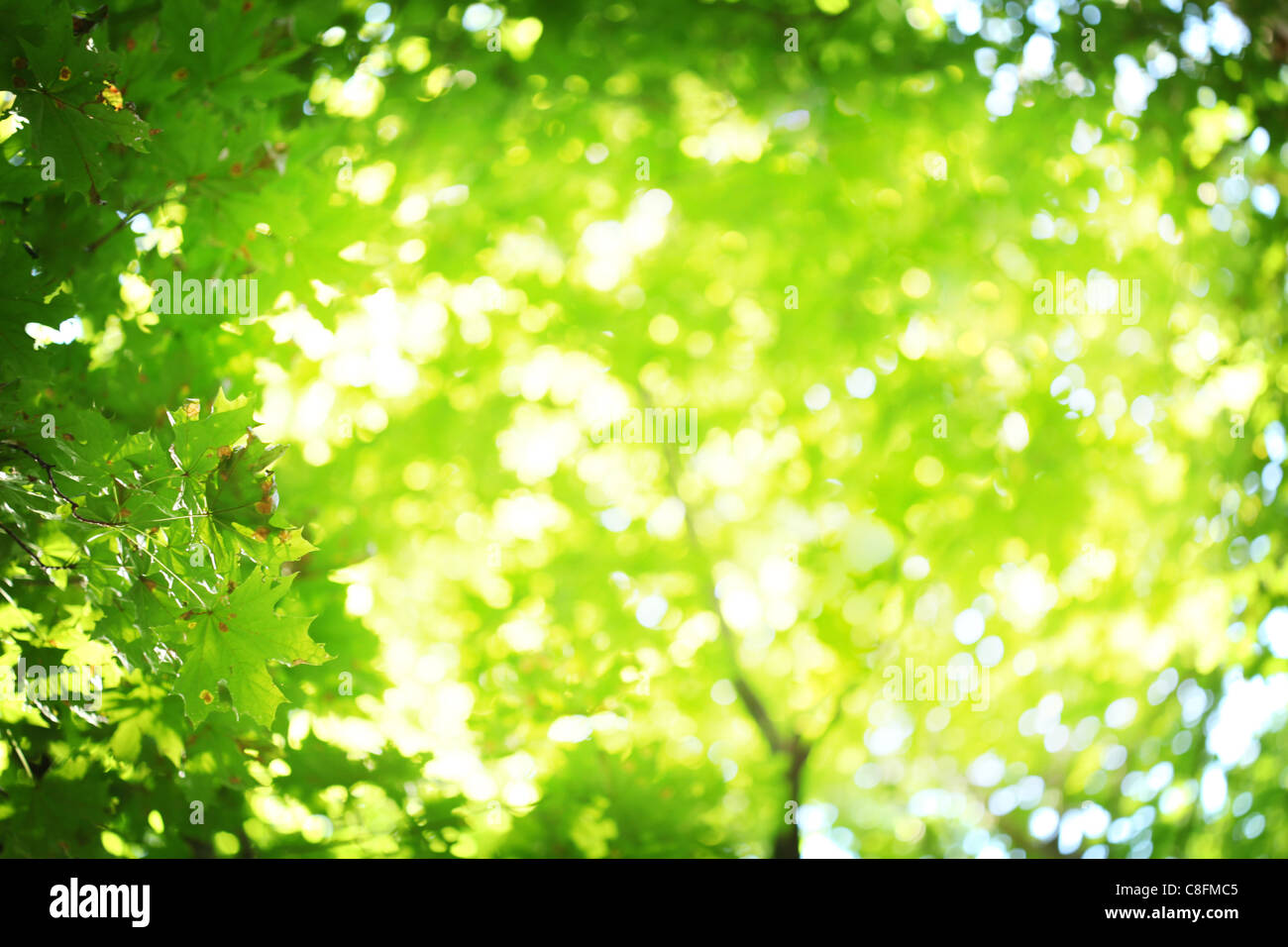 Abstract blurred background. Sun's rays shining through the lush greens. Stock Photo