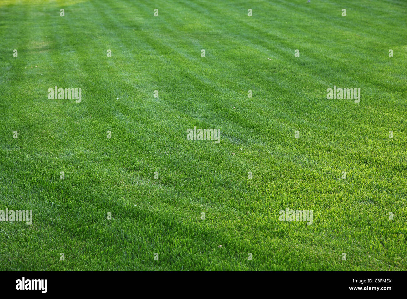 Close up shot of fresh spring green grass. - Stock Image