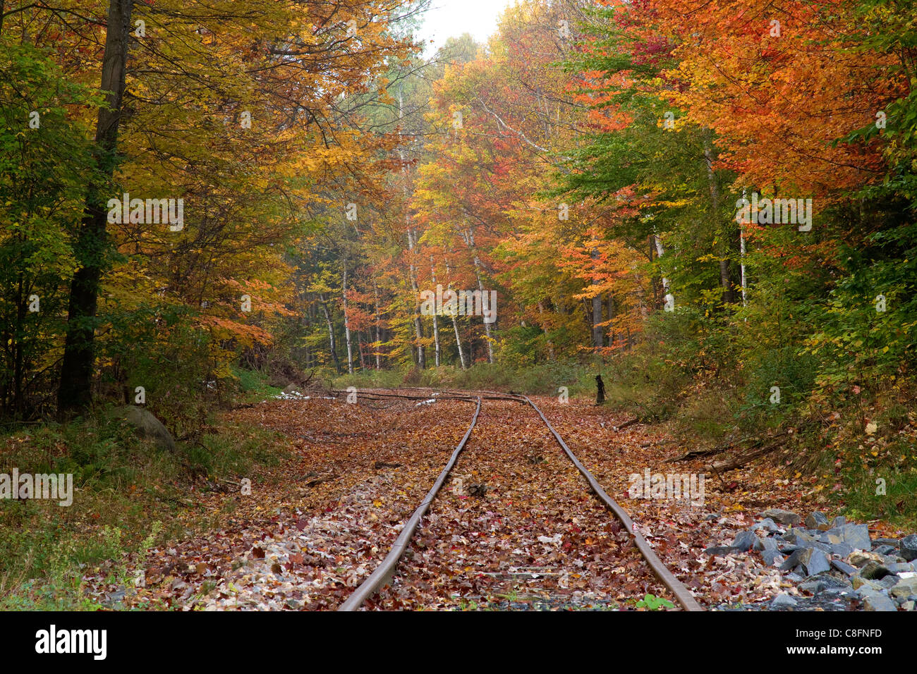 Fall, autumn, trees with bright colorful leaves in Vermont, New England makes a beautiful foliage scene along railroad - Stock Image