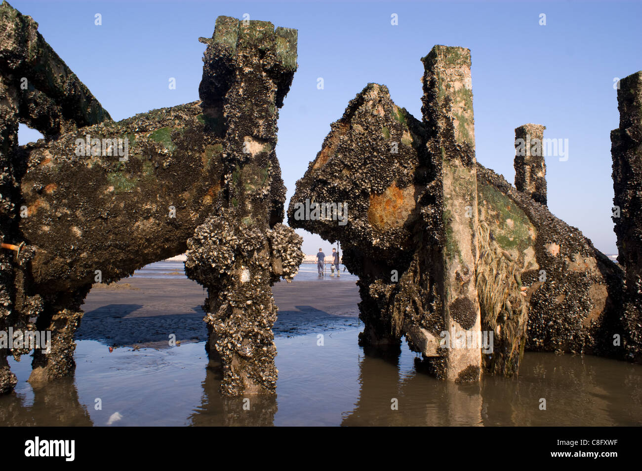 SHELL ENCRUSTED OLD SEWAGE OUTLET PIPE ON THE BEACH AT SEATON CAREW HARTLEPOOL WITH PEOPLE ON THE BEACH - Stock Image