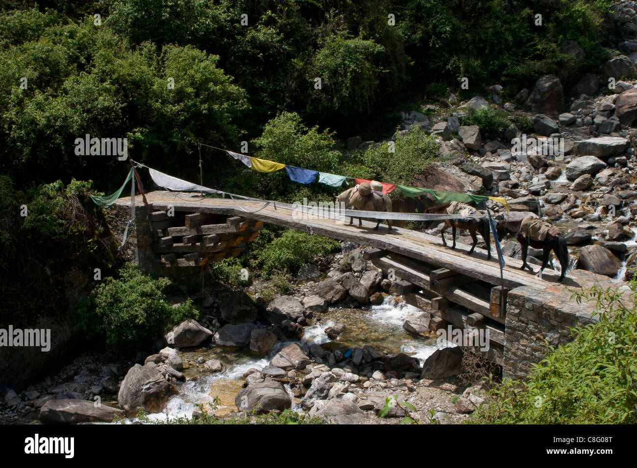 Pack ponies crossing a remote bridge near Gasa - Stock Image