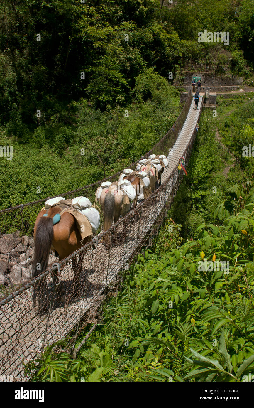 Pack ponies and a hiker walking over a suspension bridge in Bhutan - Stock Image