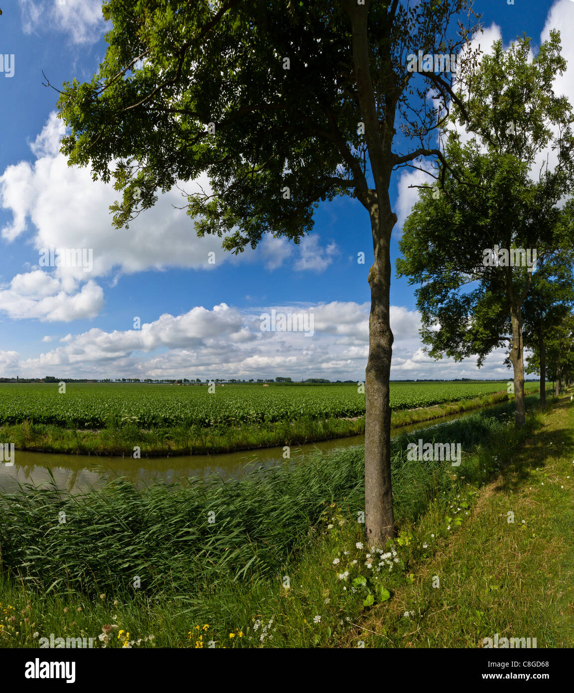 Netherlands, Europe, Holland, Noordbeemster, Polder, De Beemster, landscape, field, meadow, trees, summer, - Stock Image