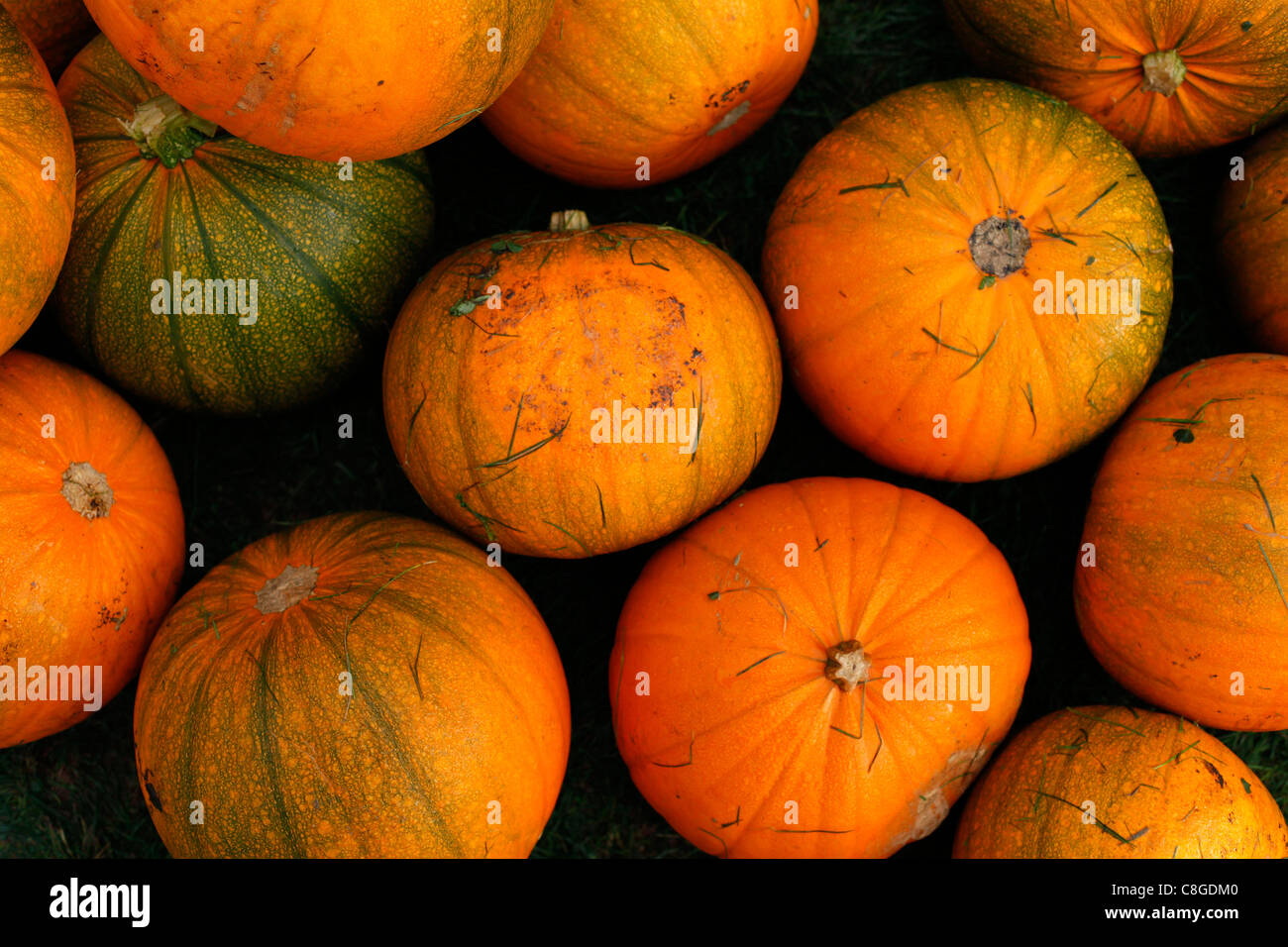Pumpkins - Stock Image