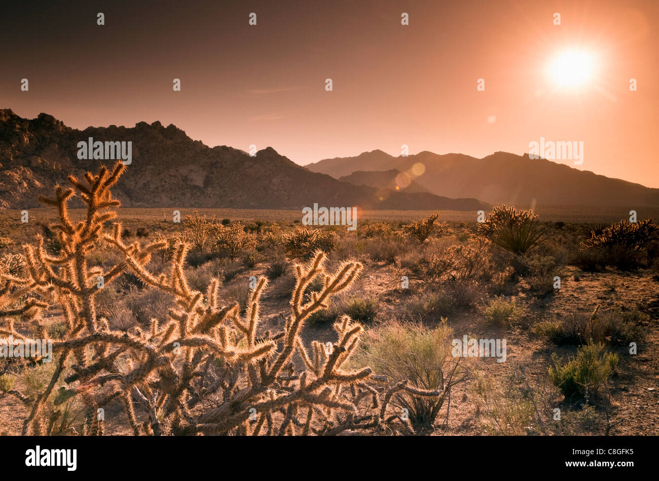 Mojave National Preserve, Granite Mountains in background, California, United States of America - Stock Image