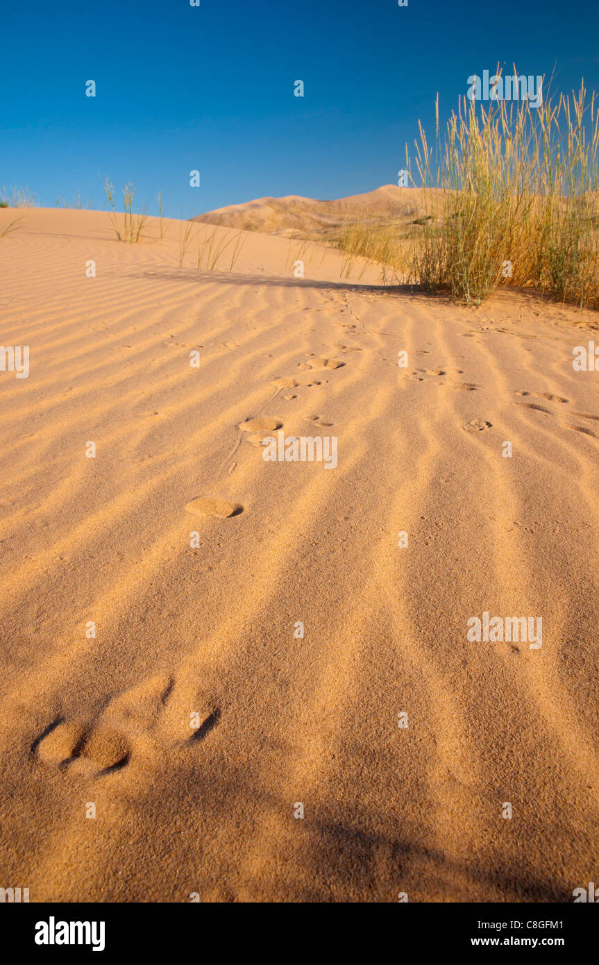 Kelso Dunes, Mojave National Preserve, California, United States of America Stock Photo