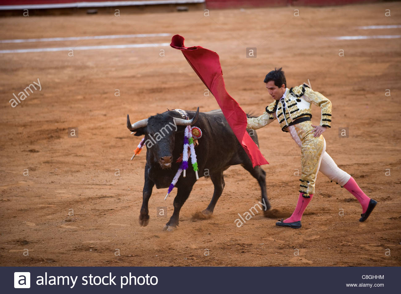 At a bullfight in Mexico City, a bull charges past the Matador. - Stock Image