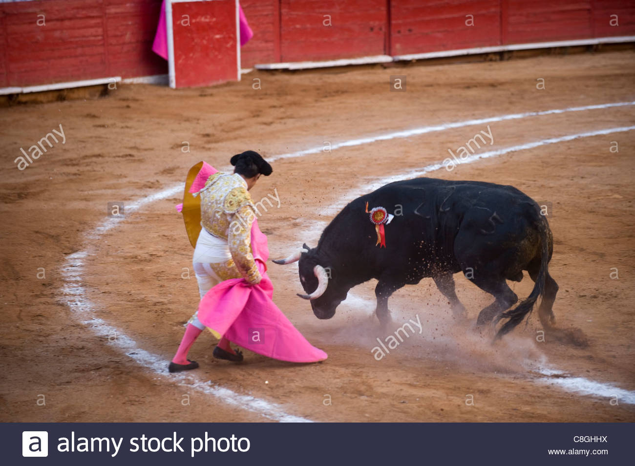 At a bullfight in Mexico City, a bull with lowered head charges. - Stock Image