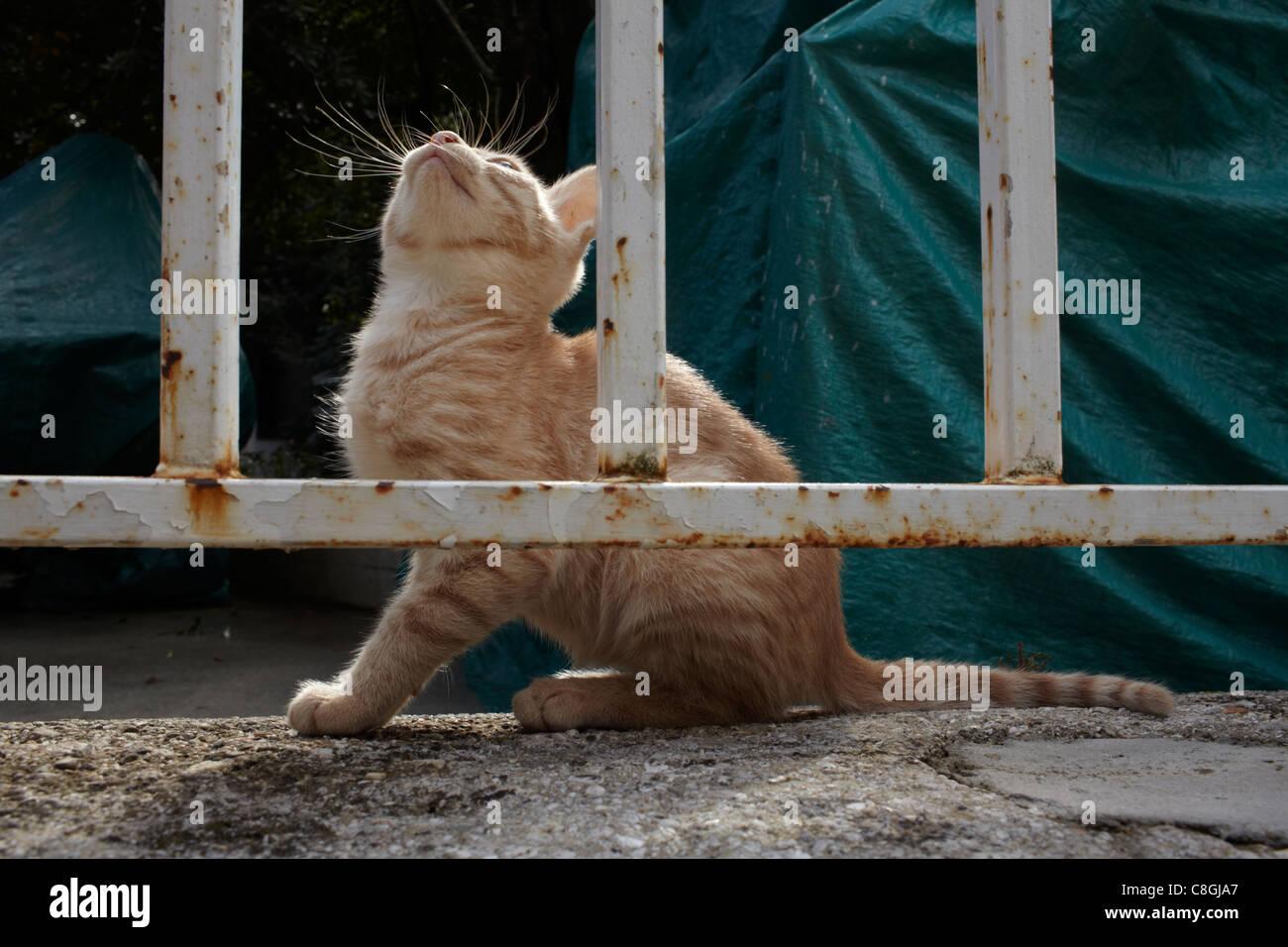 Stray ginger kitten behind bars Stock Photo