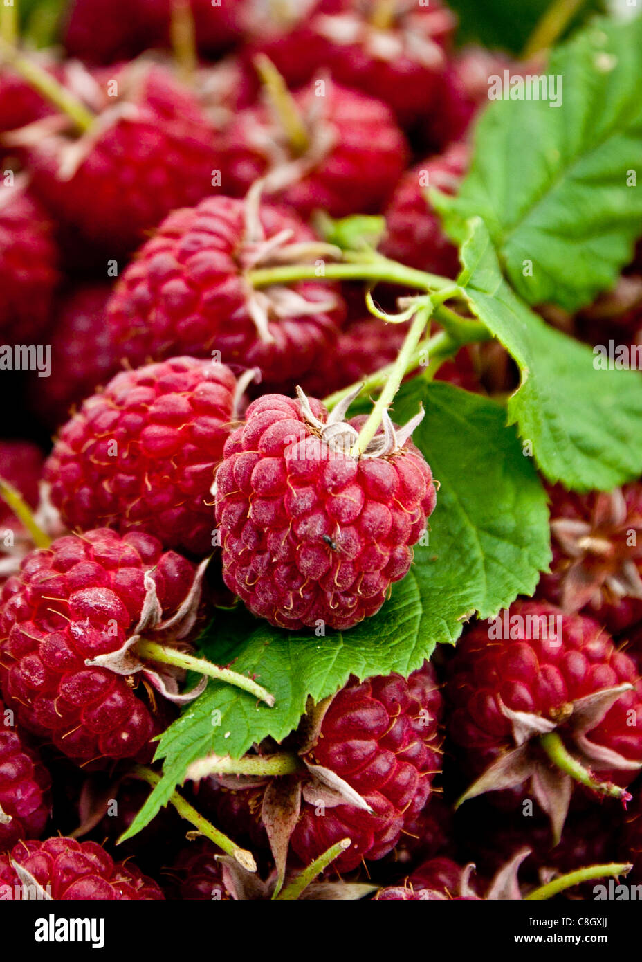 home grown English raspberry - Stock Image