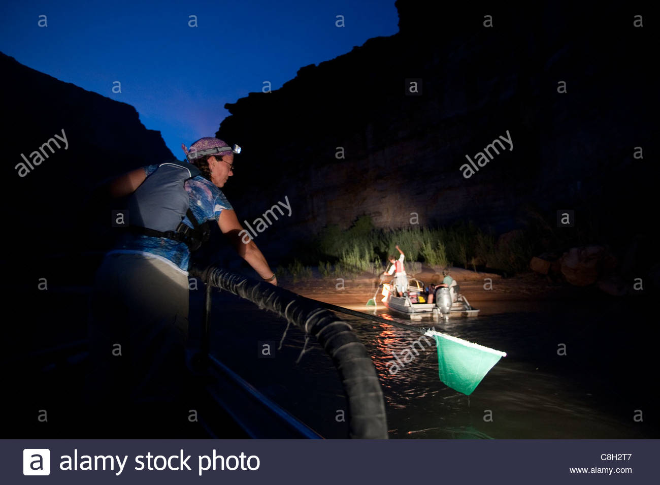 USGS scientists seek stunned humpback chub at night on the Colorado. - Stock Image