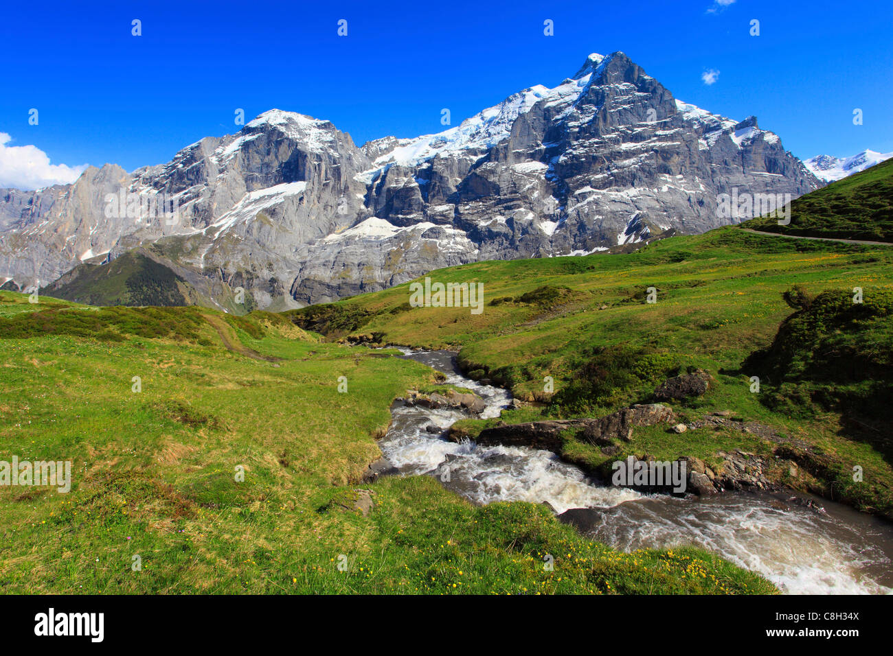 Alp, alps, flora, view, mountain, mountains, mountain spring, mountain massif, Bern, Bernese Oberland, flowers, - Stock Image