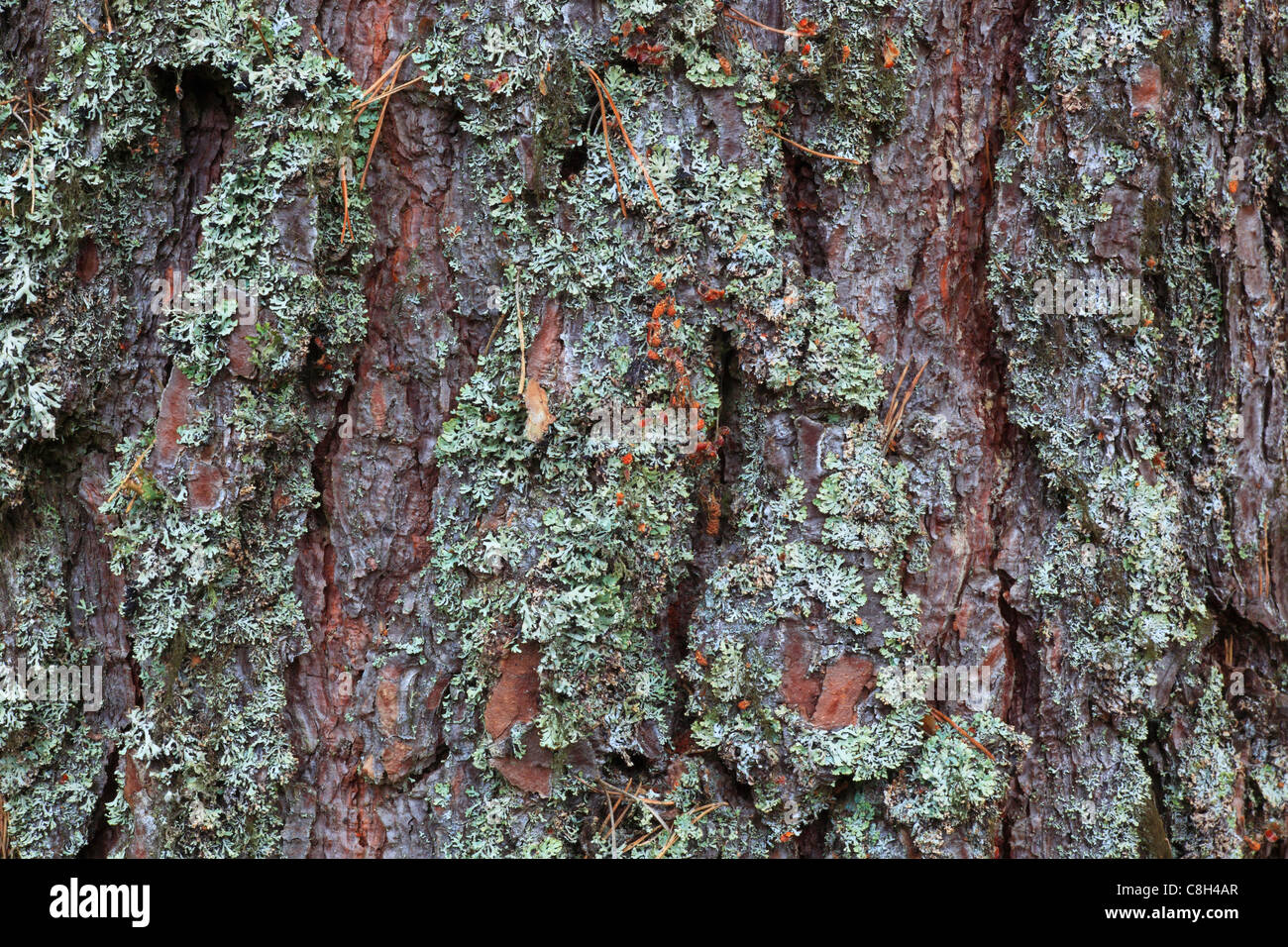 Wood covered with lichens stock photos wood covered with for What is a tree trunk covered with 4 letters