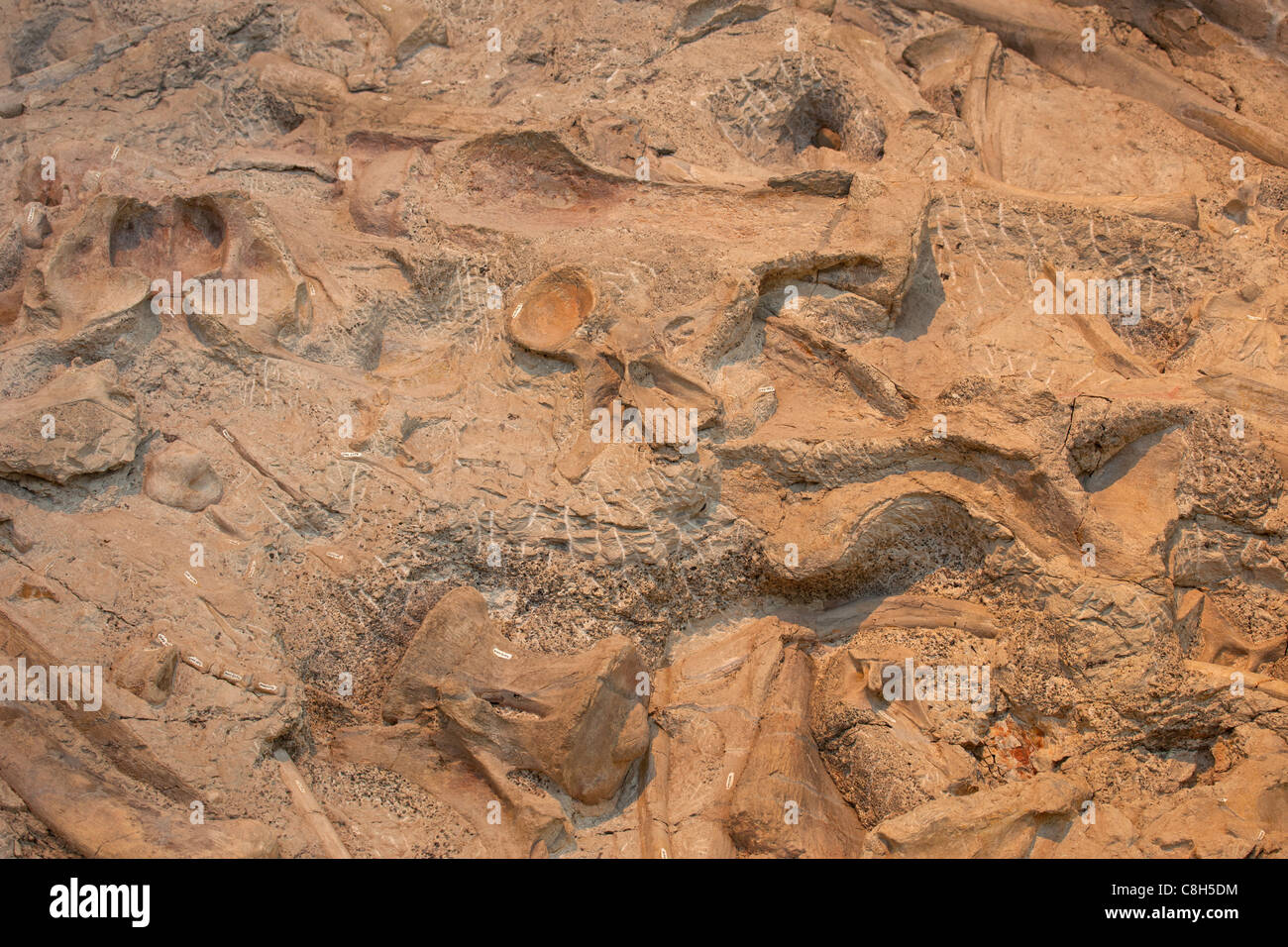 Dinosaur National Monument fossil bones embedded in rock and stone mountain. - Stock Image