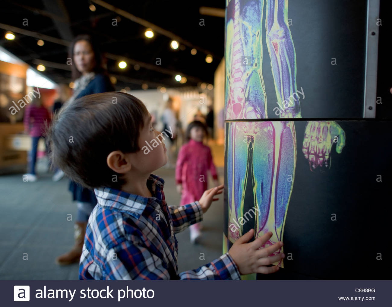 A young boy rotates a medical exhibit at a museum. - Stock Image
