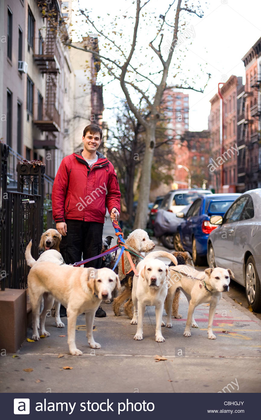 A dog-walker takes his charges out on the Upper East Side. - Stock Image