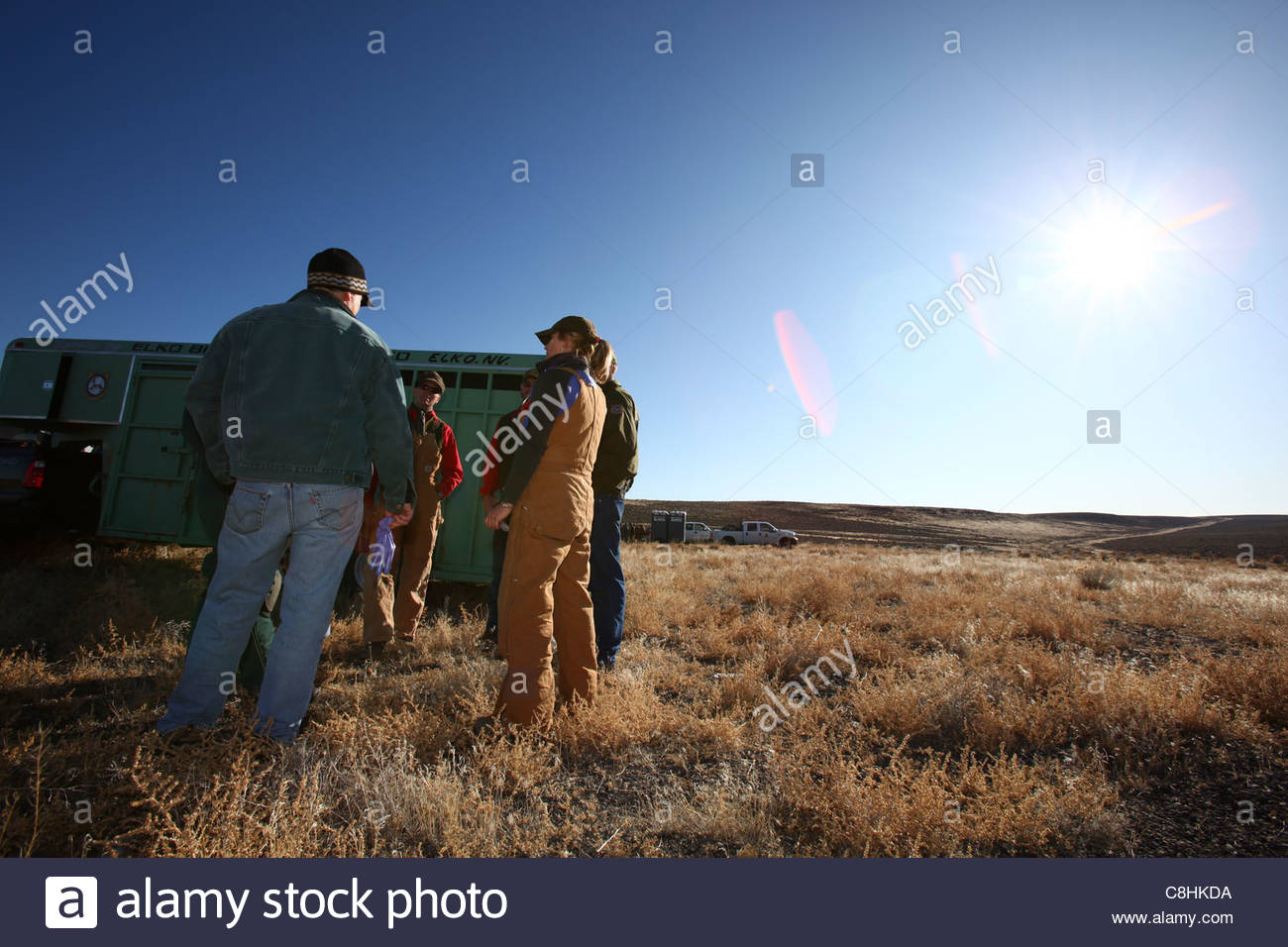The team talks about the health of a bighorn sheep ewe. - Stock Image