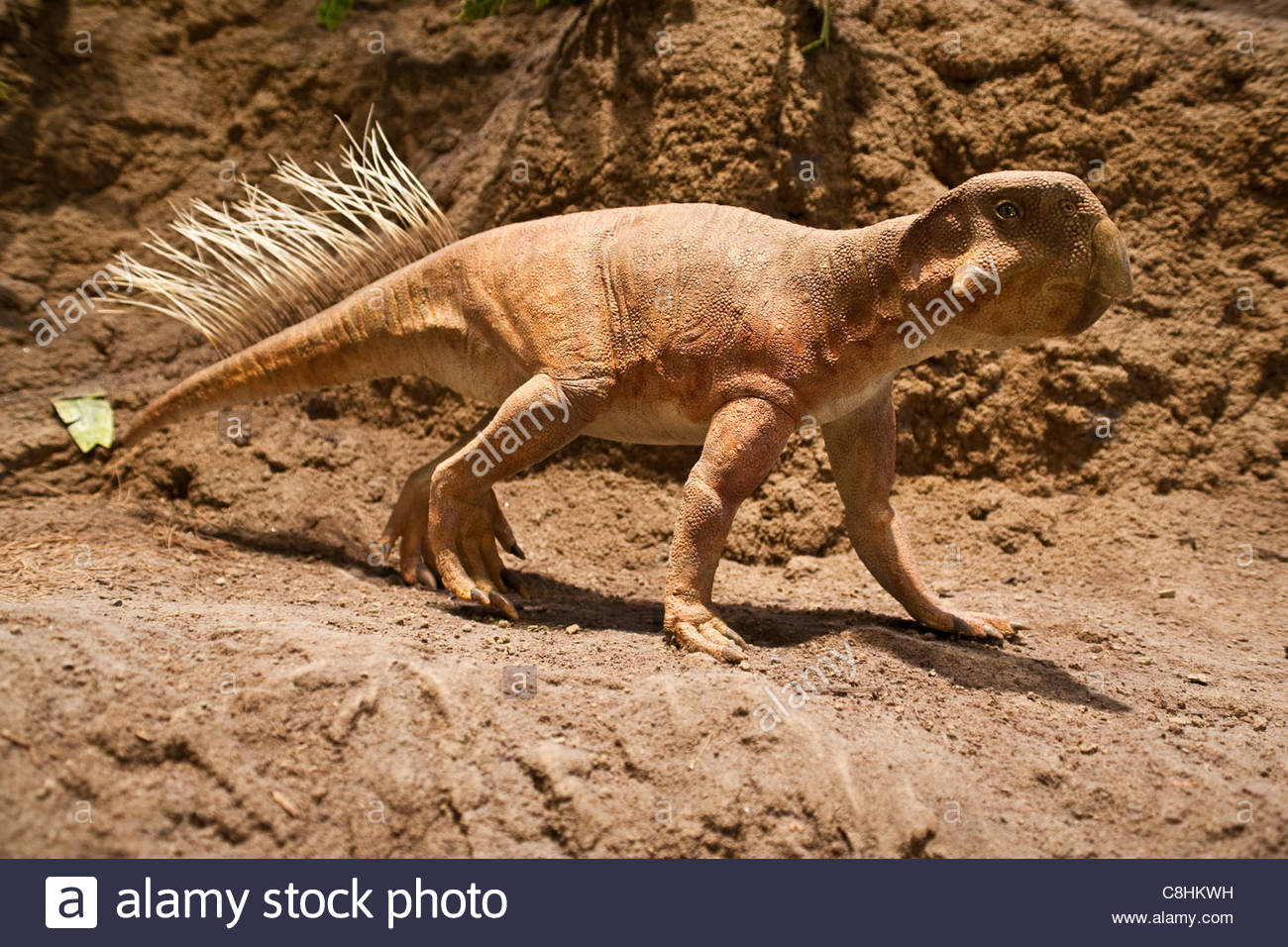 A Psittacosaurus, a meat eating horned dinosaur. - Stock Image