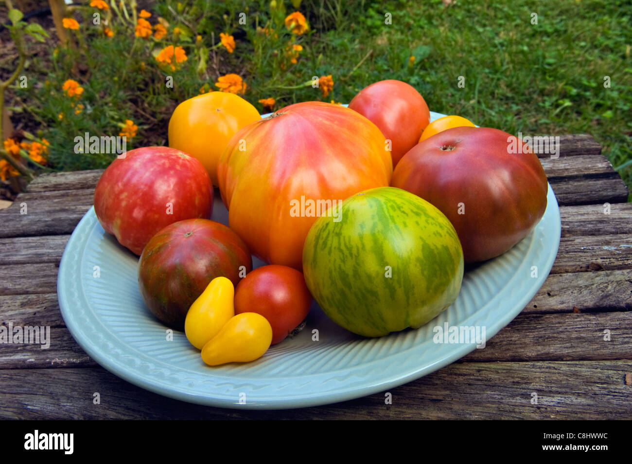 Different Varieties of Heirloom Tomatoes on Plate in Garden - Stock Image