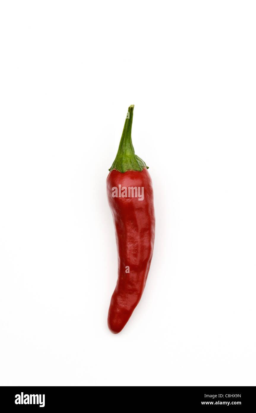 Santaka Hot Asian Chile Pepper Stock Photo