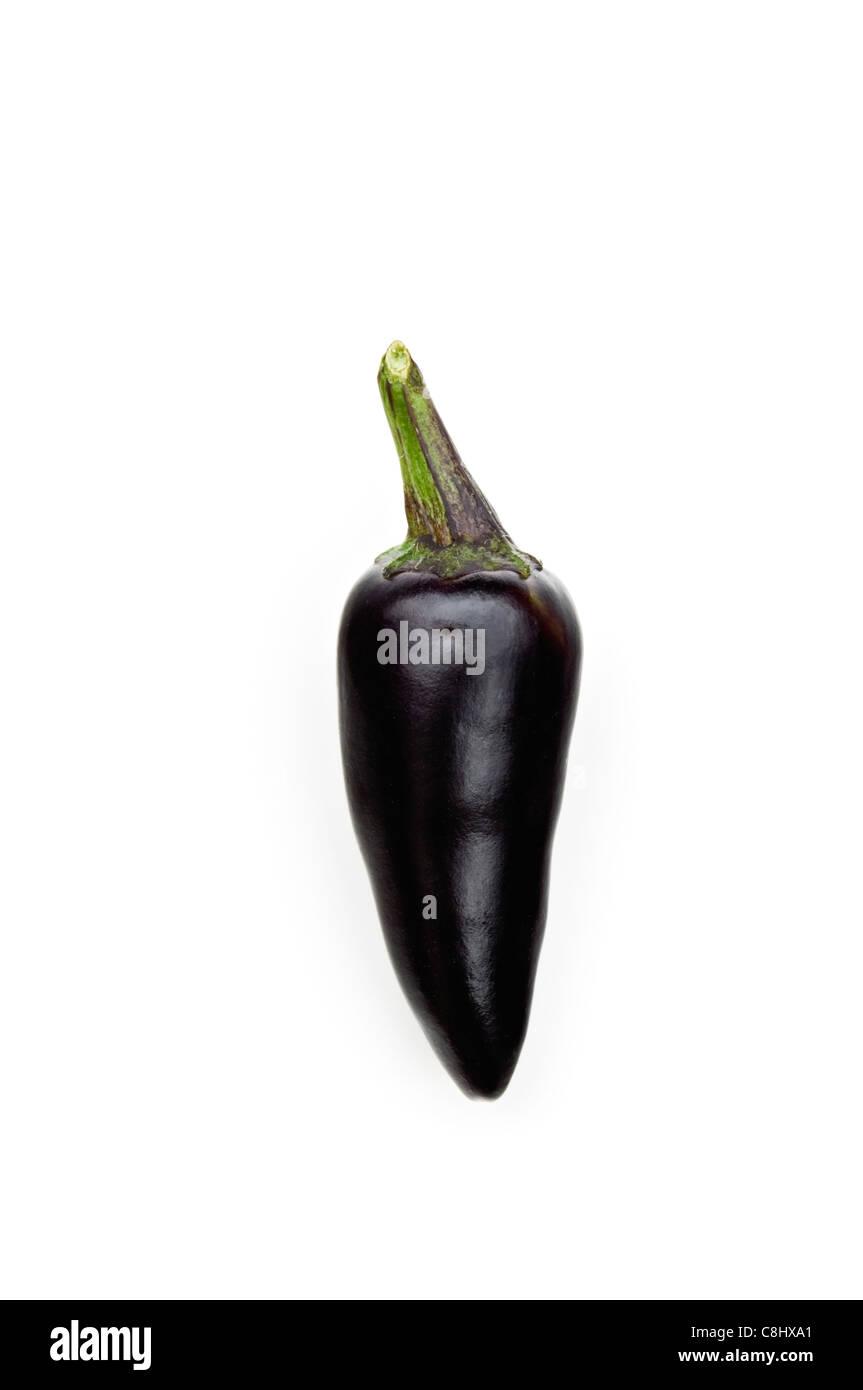 Czechoslovakian Black Chile Pepper - Stock Image