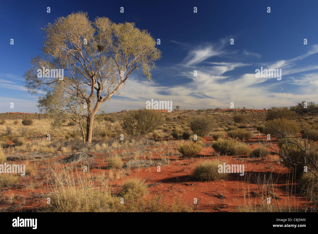 Outback, Australia, landscape, Aborigines, Australian desert, down under, Northern Territory, Central australia, - Stock Image