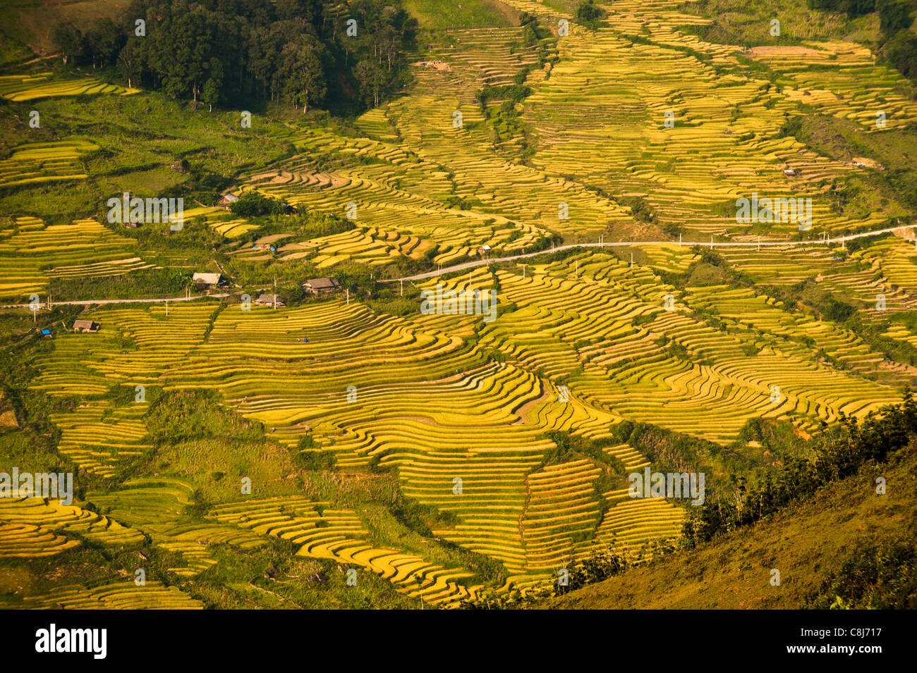 Rice terraces, North Vietnam - Stock Image