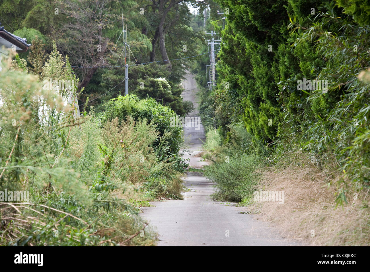 Plants and trees have begun to reclaim the roads of communities inside the nuclear exclusion zone, Okuma, Fukushima - Stock Image