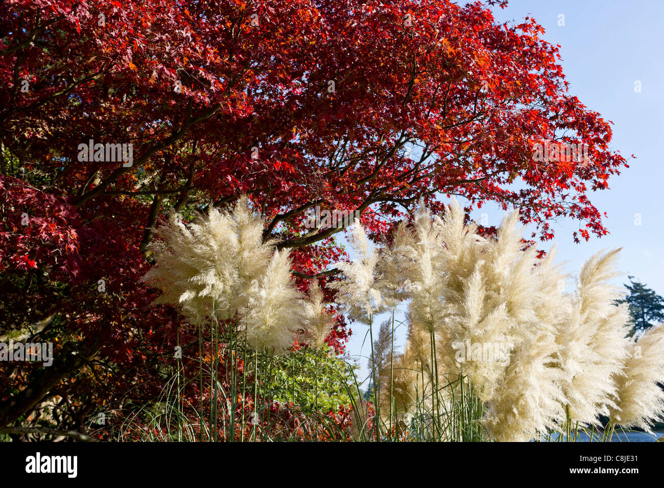 Autumn colours from many rare trees in Sheffield Park Gardens. Stock Photo
