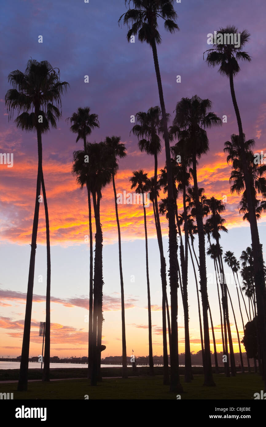 palm trees along Cabrillo Boulevard at sunset, Santa Barbara, California, United States of America - Stock Image