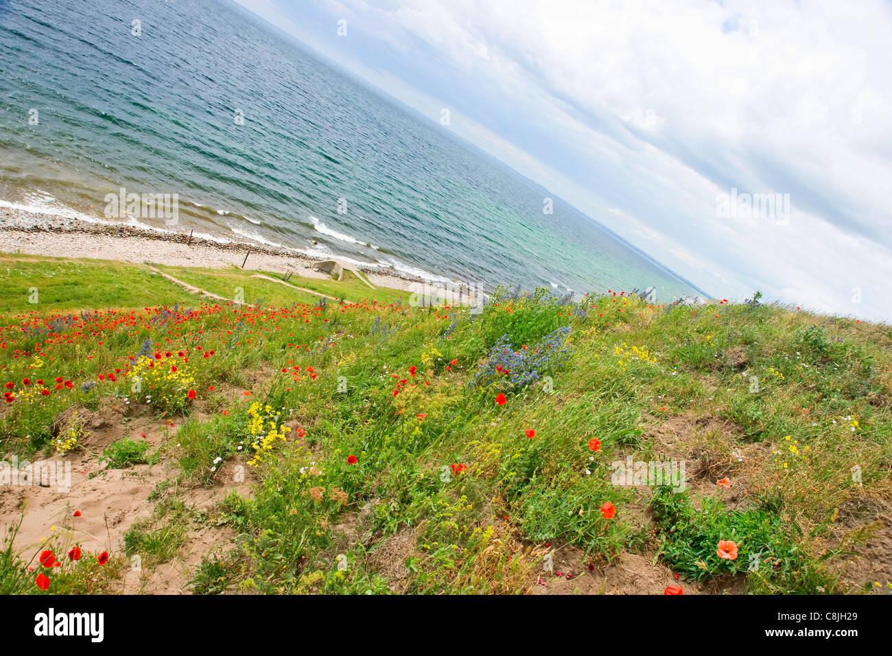 Flowers in Skane - Stock Image