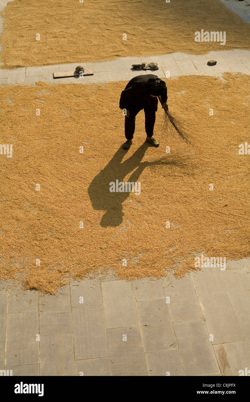 rice, drying, Chinese countryside, village life, minority, ethnic group, Miao, Dong, hills Stock Photo