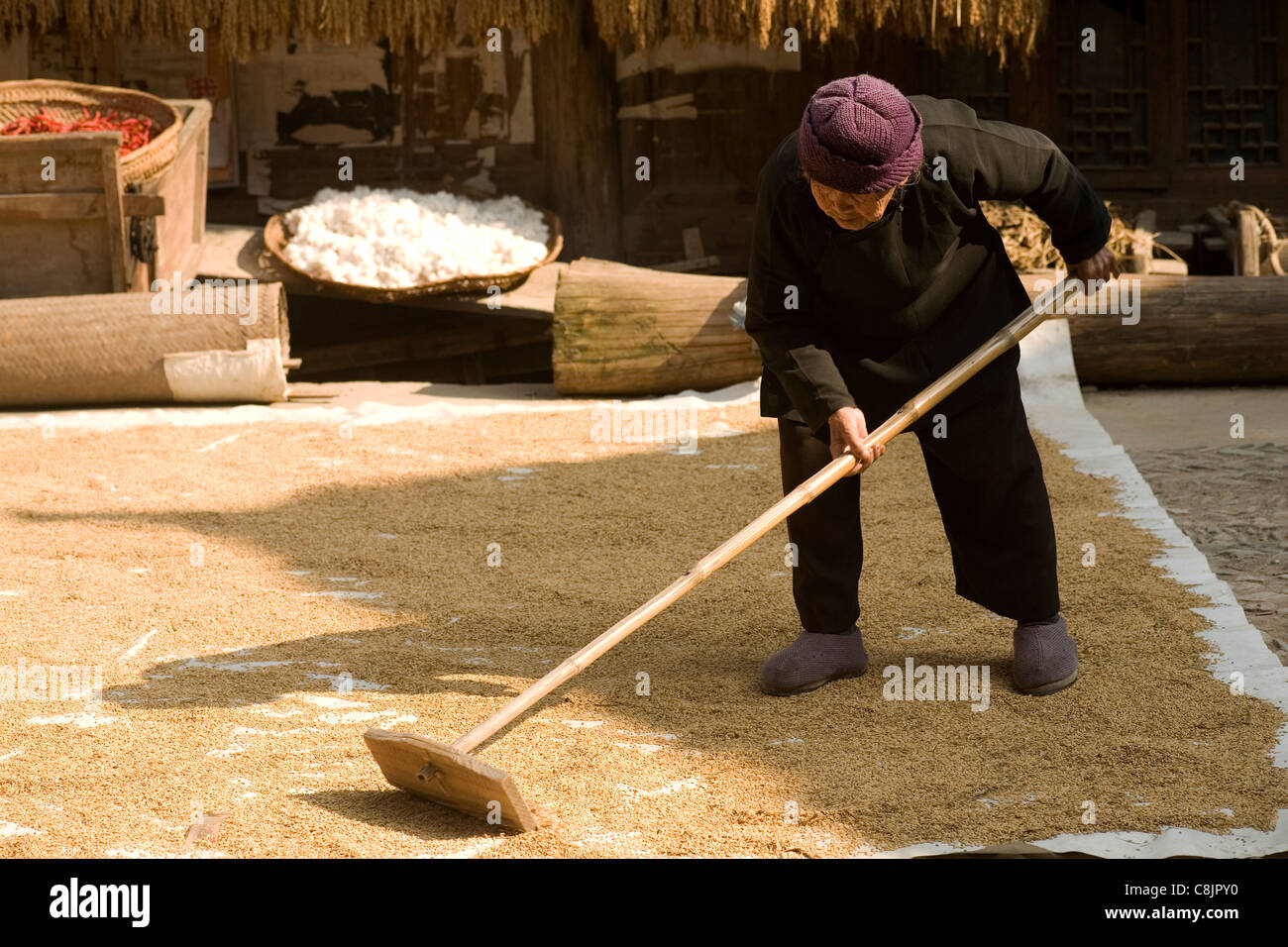 drying rice grains, no retirement, Chinese, people, woman, women, village, countryside Stock Photo