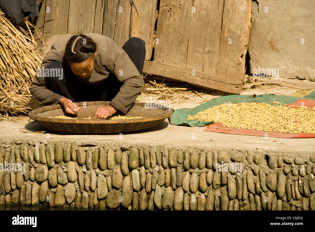 Picking up dirt from a tray of rice grains, rice, cleaning, work, working , couching, Dong, Miao, ethnic, minority, - Stock Image