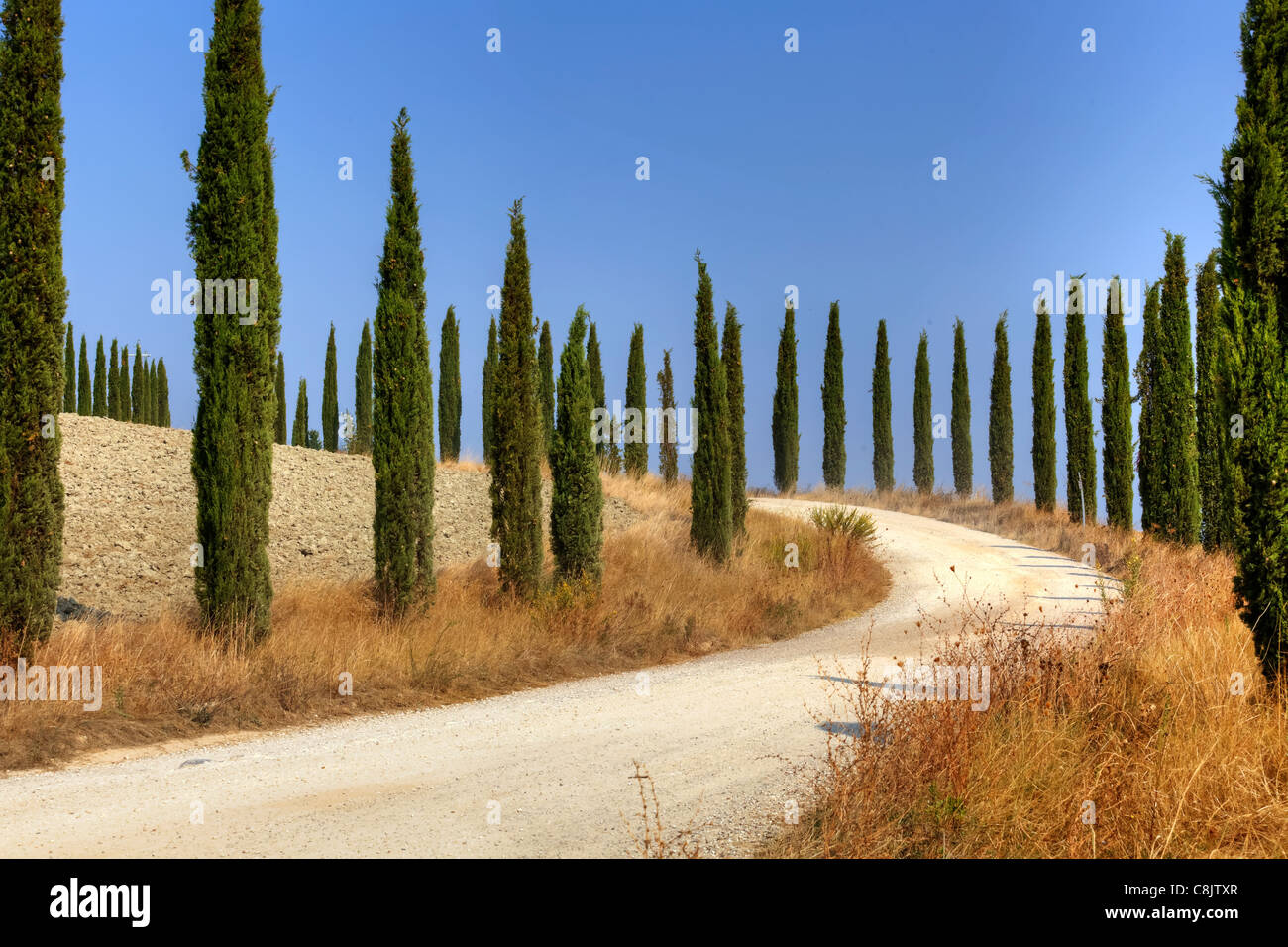 an avenue with cypress trees - Stock Image