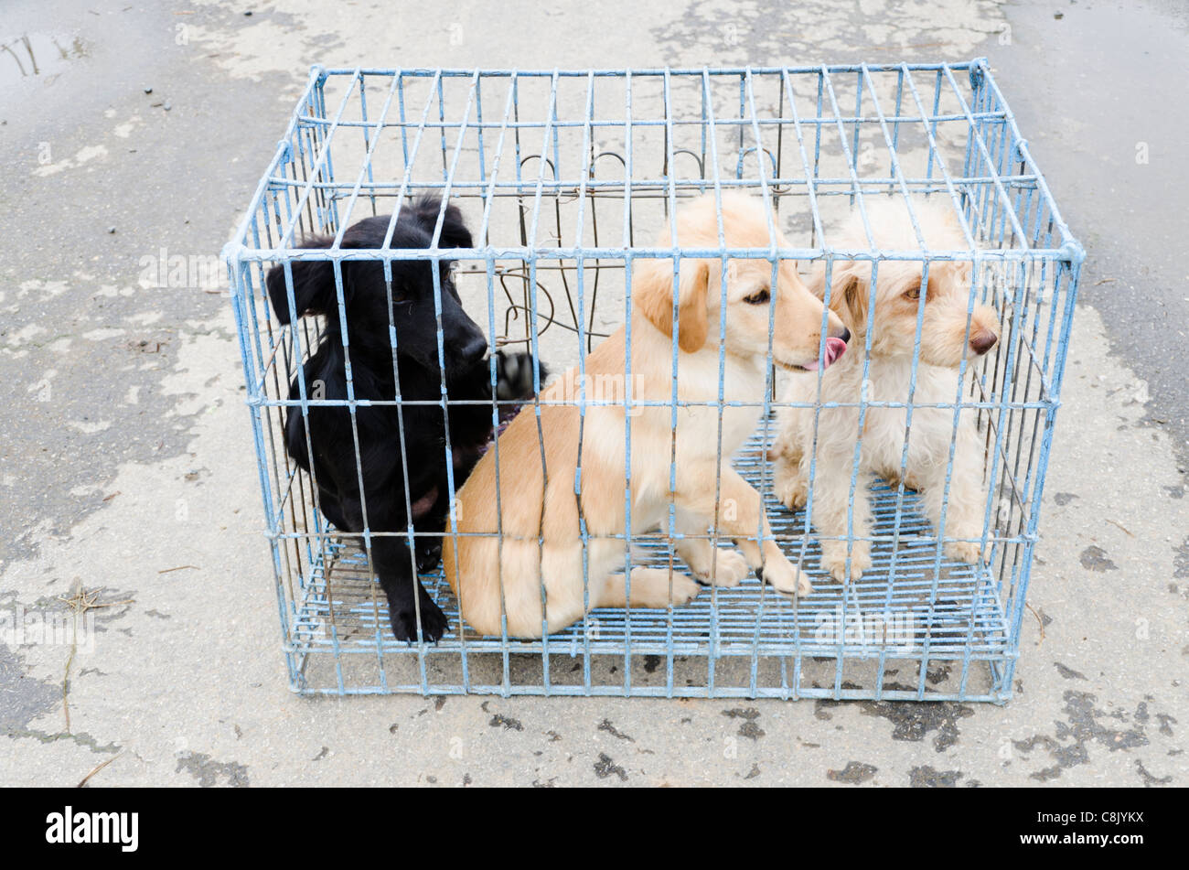 Caged Dogs Stock Photos & Caged Dogs Stock Images - Alamy