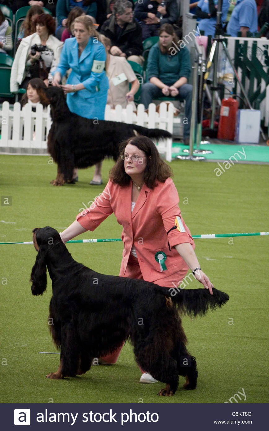 Londoners: Discover Dog Show at Earls Court, London - Stock Image